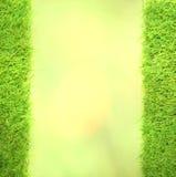 Quadrat des grünen Rasenflächegrüns Lizenzfreie Stockfotos