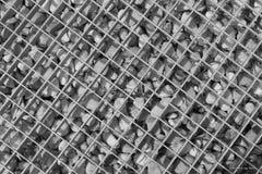 quadrate Lizenzfreie Stockbilder