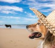 quadratische Formatfarbe schoss vom Schoßhund, der einen Strohsonnenhut auf den Strand trägt Stockbild