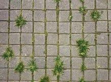 Quadratische graue Fliesen auf dem Boden mit grünem Gras und Moos in Lizenzfreies Stockfoto