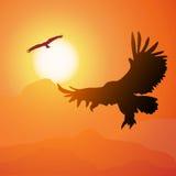 Quadratische Karikaturillustration des hochfliegenden Adlers und des Sonnenuntergangs. Lizenzfreie Stockfotografie