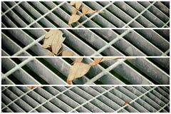 Quadratische Metallluke in der städtischen Pflasterung, im Abwasserkanalkanaldeckel mit Markierungslinien und im Blatt nach innen Stockfotografie
