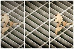 Quadratische Metallluke in der städtischen Pflasterung, im Abwasserkanalkanaldeckel mit Markierungslinien und im Blatt nach innen Lizenzfreie Stockfotos