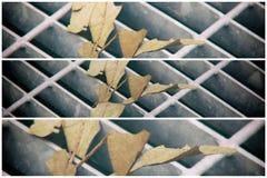 Quadratische Metallluke in der städtischen Pflasterung, im Abwasserkanalkanaldeckel mit Markierungslinien und im Blatt nach innen Stockfoto