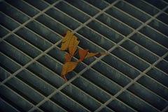 Quadratische Metallluke in der städtischen Pflasterung, im Abwasserkanalkanaldeckel mit Markierungslinien und im Blatt nach innen Lizenzfreie Stockbilder