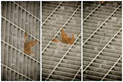 Quadratische Metallluke in der städtischen Pflasterung, im Abwasserkanalkanaldeckel mit Markierungslinien und im Blatt nach innen Stockbild