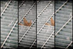 Quadratische Metallluke in der städtischen Pflasterung, im Abwasserkanalkanaldeckel mit Markierungslinien und im Blatt nach innen Stockbilder