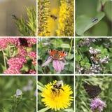 Quadratische Sommercollage mit Insekten auf Blumen Stockfotos