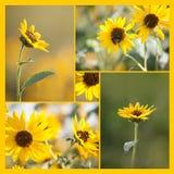 Quadratische Sonnenblumen-und Bienen-Collage Stockbild