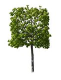 Quadratischer Baum Lizenzfreie Stockbilder