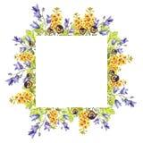 Quadratischer Rahmen des Watercolour von eremurus, Glockenblumen, Blätter, purpurrote Veilchen stock abbildung