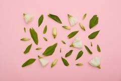 Quadratischer Rahmen des weißen Eustoma auf rosa flatlay Lizenzfreie Stockbilder