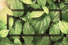 Quadratischer Rahmen, kreativer Plan machte grünen Laubbaumhintergrund mit Papierkartenanmerkung Freier Raum für Werbeschild oder stockfotografie