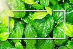 Quadratischer Rahmen, kreativer Plan machte grünen Laubbaumhintergrund mit Papierkartenanmerkung Freier Raum für Werbeschild oder lizenzfreie stockfotografie