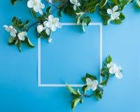 Quadratischer Rahmen mit Blütenapfel auf blauem Hintergrund Stockbild