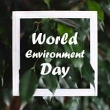 Quadratischer Rahmen mit Weltumwelttagtext auf grünem Pflanzenblätterhintergrund Karte auf dem Thema der Natur und der Flora stockfotos