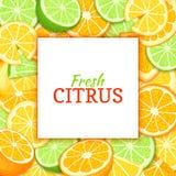 Quadratischer weißer Aufkleber auf orange Zitronenhintergrund des Zitrusfruchtkalkes Vektorkartenillustration Tropische frische u Lizenzfreies Stockfoto