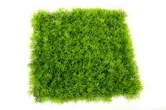Quadratisches grünes Gras Stockfoto