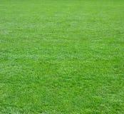 Quadrato del campo di erba verde Immagini Stock Libere da Diritti
