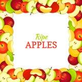 Quadri la struttura colorata composta di frutta succosa deliziosa della mela Illustrazione della carta di vettore Mele di rettang Fotografia Stock Libera da Diritti