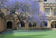 Quadrilatero dell'università di Sydney Fotografie Stock Libere da Diritti