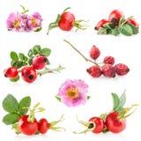 Quadris de Rosa Fotografia de Stock Royalty Free