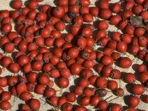 Quadris vermelhos Fotografia de Stock Royalty Free