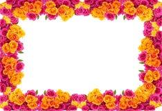 Quadro amarelo e cor-de-rosa das rosas foto de stock