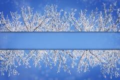 Quadro beiras dos ramos cobertos de neve contra um b nevado azul Fotografia de Stock