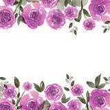 Quadro bonito da flor da aquarela Fundo com rosas roxas ilustração stock