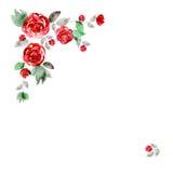 Quadro bonito da flor da aquarela Fundo com rosas vermelhas ilustração stock