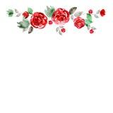 Quadro bonito da flor da aquarela Fundo com rosas vermelhas ilustração do vetor