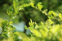 Quadro bonito das folhas verdes fotos de stock royalty free