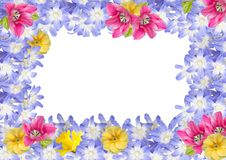 Quadro, cartão das flores da mola isoladas Fotografia de Stock Royalty Free