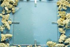 Quadro cinzento com flores secadas imagens de stock royalty free