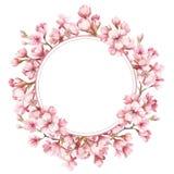 Quadro com as flores de cerejeira Ilustração da aguarela Imagem de Stock Royalty Free