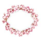 Quadro com as flores de cerejeira Ilustração da aquarela da tração da mão Fotos de Stock Royalty Free