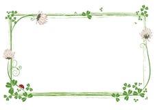 Quadro com as flores do trevo e da joaninha Imagens de Stock