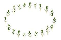 Quadro com as folhas do verde no fundo branco Imagem de Stock Royalty Free