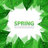 Quadro com as folhas frescas do verde com sparkles Imagem de Stock Royalty Free