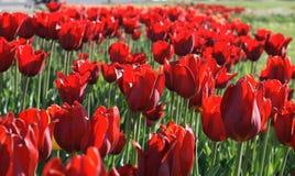 Quadro com as pétalas de flores secadas Foto de Stock