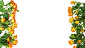 Quadro com as rosas cor-de-rosa de vida da cor coral no fundo branco Mola de espera Configuração lisa, vista superior Copie o esp foto de stock