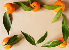 Quadro com citrinos Fotos de Stock