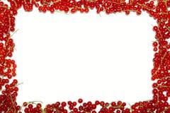 Quadro com corintos vermelhos e mirtilos Imagens de Stock