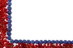 Quadro com corintos vermelhos e mirtilos em um fundo branco Fotografia de Stock
