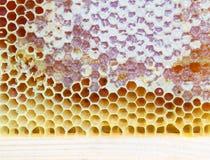 Quadro com favos de mel da abelha Fotos de Stock Royalty Free