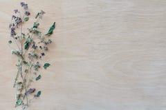 Quadro com flor secada fotografia de stock royalty free