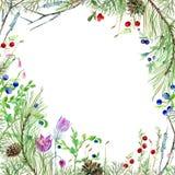 Quadro com a flora da floresta do pinho Fotos de Stock Royalty Free