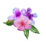 Quadro com flores da cereja Ilustração da aguarela Imagem de Stock Royalty Free