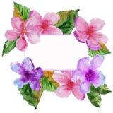 Quadro com flores da cereja Ilustração da aguarela Imagem de Stock